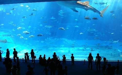 美ら海水族館大水槽を泳ぐジンベエザメ