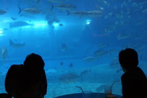 美ら海水族館大水槽