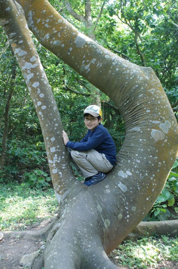 ゲゲゲの鬼太郎実写版の撮影に使われた木